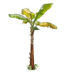Palm banana tree with yellow leaves vector