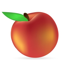peach on a white background vector image
