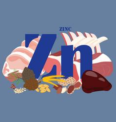 Zinc healthy nutrient rich food vector