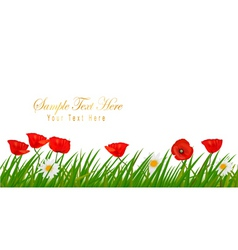 poppy white background vector image
