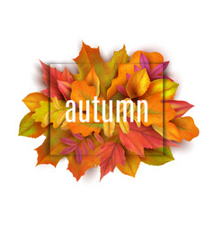 autumn banner leaves background card with vector image