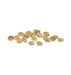 hemp seeds vector image