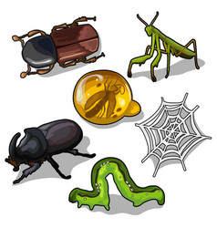 World insects beetles grasshopper and others vector