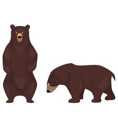 Cartoon brown bears vector