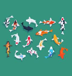 Koi fishes japanese colorful carp asian vector