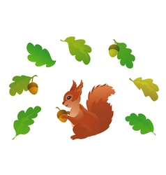 Squirrel and oak leaves vector