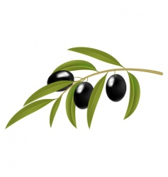 olive branch vector image vector image