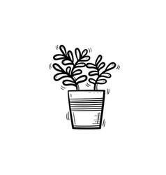 ficus in a pot hand drawn sketch icon vector image vector image