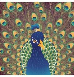 Cartoon Peacock Portrait2 vector image