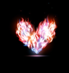 human heart in flames vector image