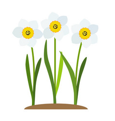 Spring narcissus flowers background vector