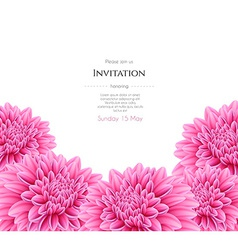 Blooming beautiful aster flower vector image