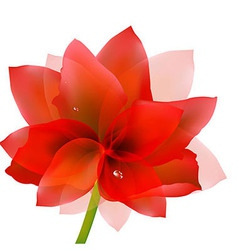 Red Tulip With Water Drop vector