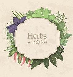 Vintage card with herbs and spices on paper vector image