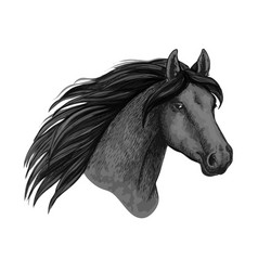 Horse animal muzzle sport sketch icon vector