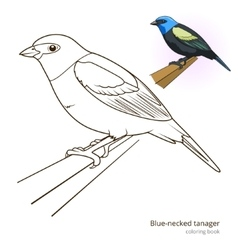 Blue necked tanager color book vector