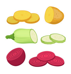 potato beet zucchini cartoon flat style vector image