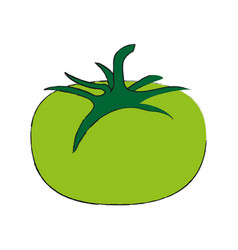Green tomato fruit icon image vector
