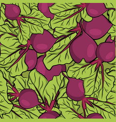 seamless pattern hand drawn garden beet vector image
