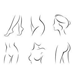 Set of stylized body parts vector