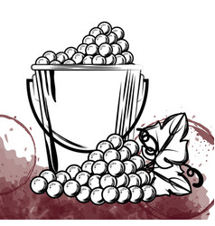 best wine grapes in bucket vector image