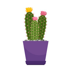 Cactus with flowers house plant vector