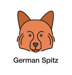 german spitz color icon vector image