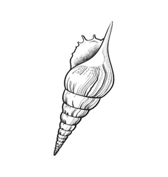 spiral conch sea shell isolated sketch style vector image