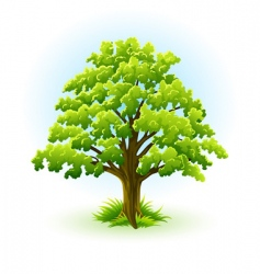 Oak tree vector