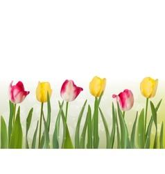 Spring tulipa background EPS 10 vector image