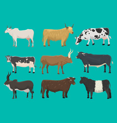 Bulls and cows farm animal cattle mammal vector