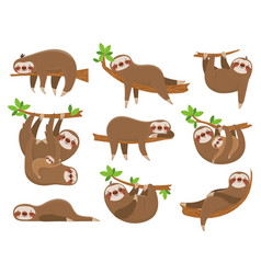 Cartoon sloths family adorable sloth animal at vector