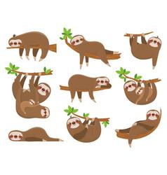 Cartoon sloths family adorable sloth animal vector