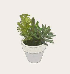 indoor plants in pots vector image