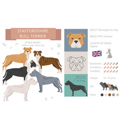 Staffordshire bull terrier dog isolated on white vector