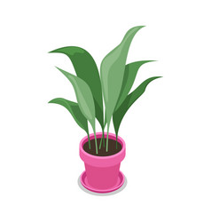 beautiful flower in pot isometric 3d icon vector image