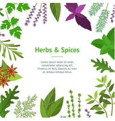 cartoon color herbs spices card vector image