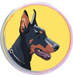 Closeup serious dog Doberman Pinscher breed vector