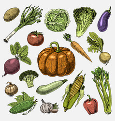 Set hand drawn engraved vegetables vegetarian vector