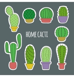 Set the cacti in pots vector