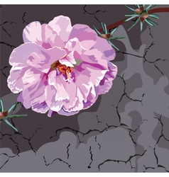 Beautiful Watercolor Pink flower vector image