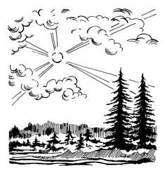 coniferous forest landscape vector image vector image