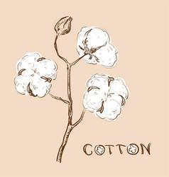 cotton branch vector image vector image