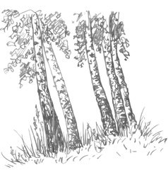 Birch trunks and grass vector