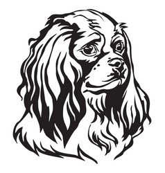 Decorative portrait of dog cavalier king charles vector