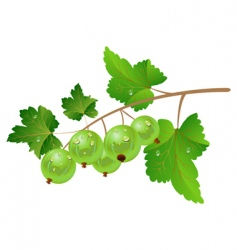 Green gooseberry vector