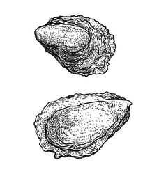 oyster drawing engraving ink line vector image