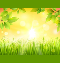Sunrise In Forest vector image