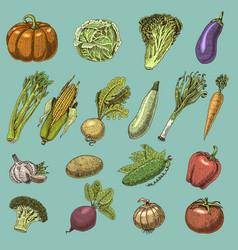 set of hand drawn engraved vegetables vegetarian vector image vector image