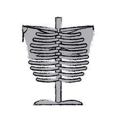 skeleton chest human part anatomy vector image